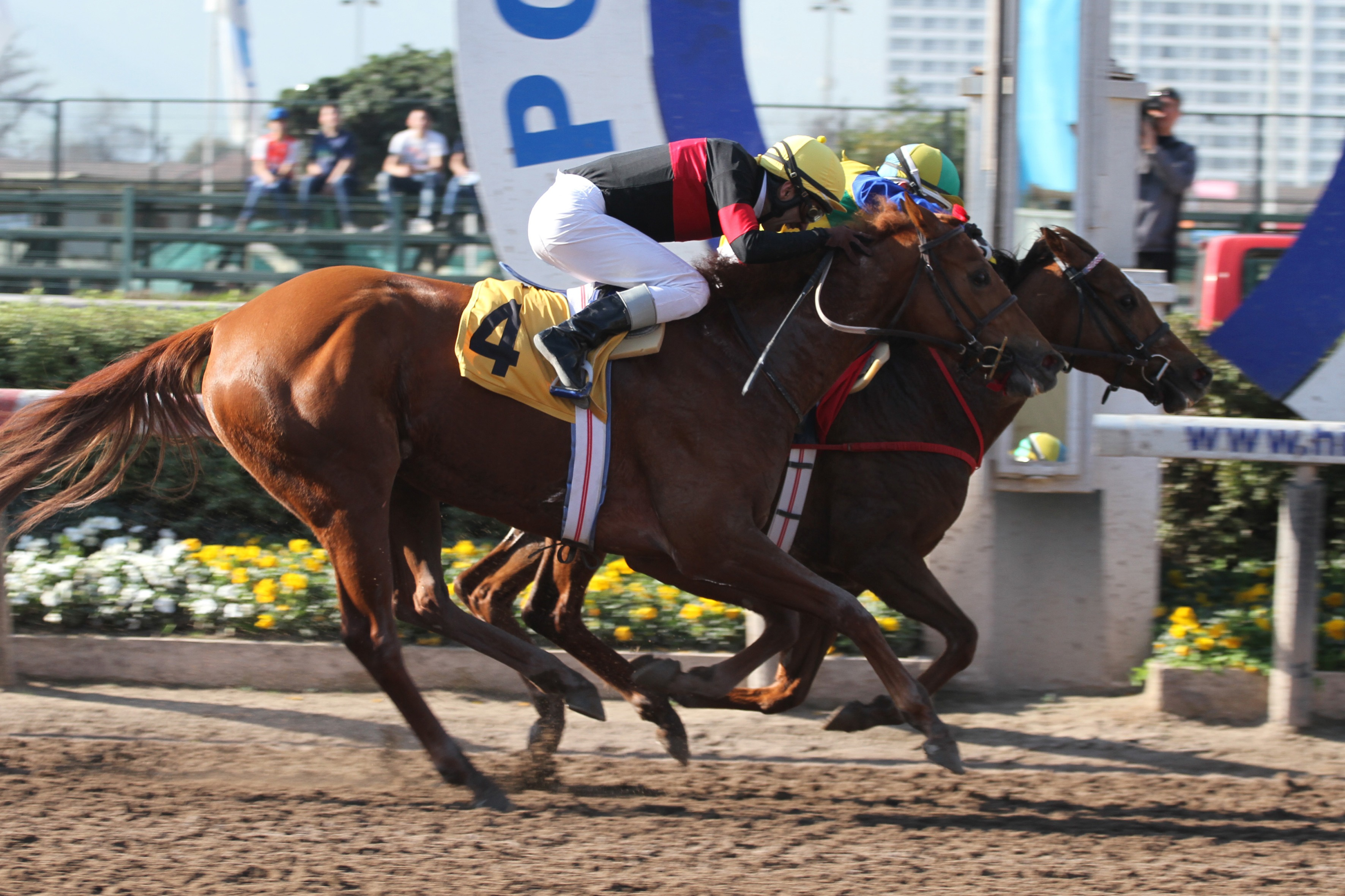 Going Away (Seeking The Dia) se adjudica el Clásico Carlos Allende Navarro (G3-1500m-Arena-HCH). - Staff ElTurf.com