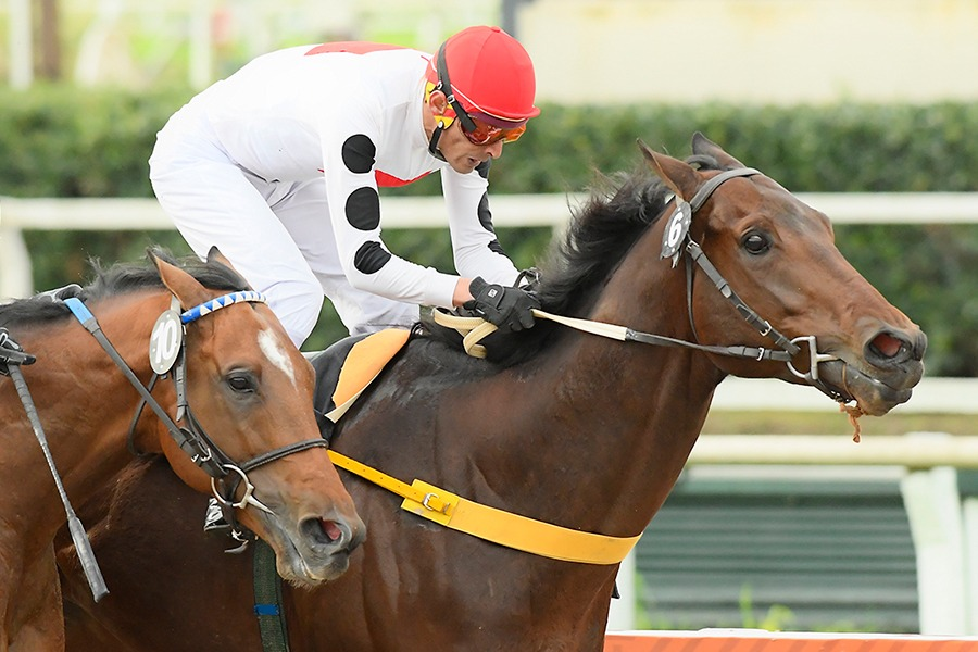 Caligrafico (Equal Stripes) gana Condicional (1400m-Arena-PAL). - Staff ElTurf.com