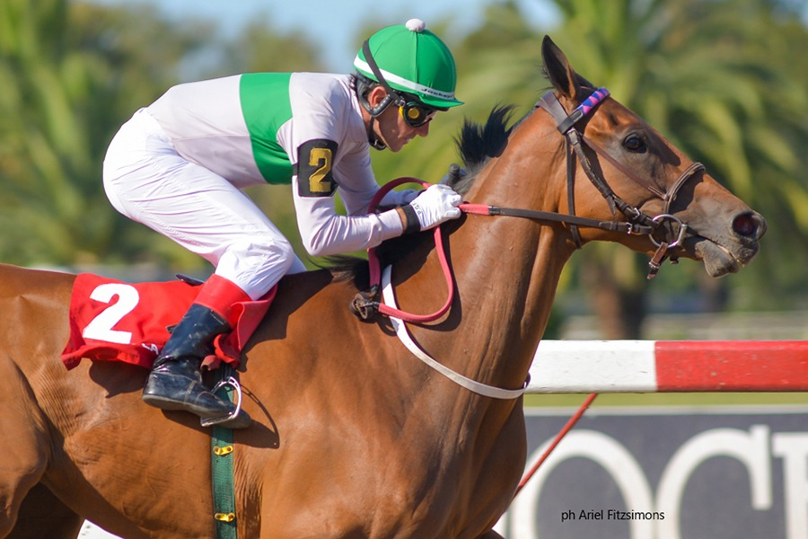 Ginger In The Rye (Catcher in the Rye) brilla en Handicap (2000m-Arena-LP). - Staff ElTurf.com