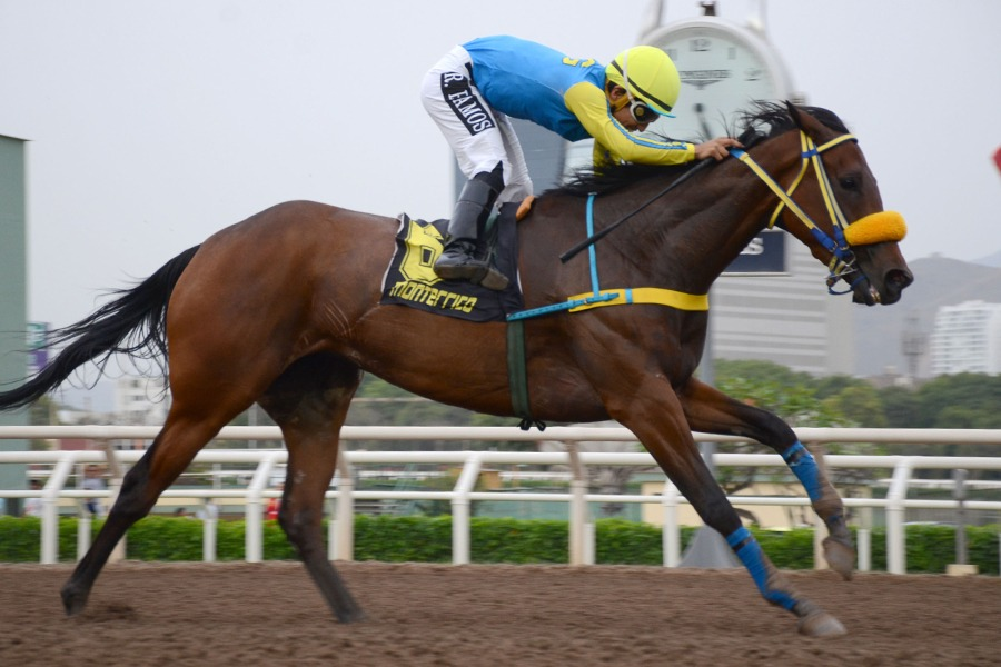 Irish Gal (Dominguin) se adjudica Condicional (1000m-Arena-MONT). - Staff ElTurf.com