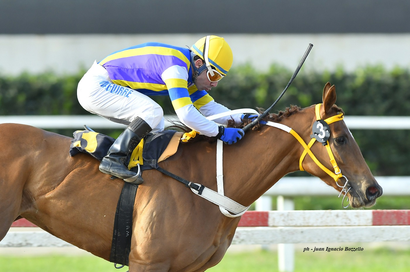 Gran Optima (Grand Reward) se adjudica Condicional (1600m-Arena-PAL). - Staff ElTurf.com