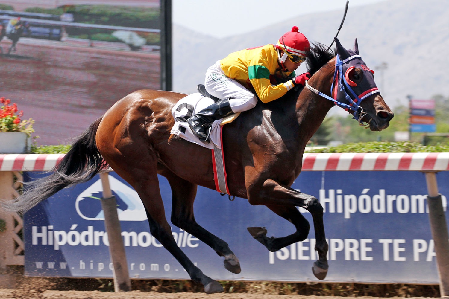 Life Is Beautiful (Warrior´s Reward) se adjudica Condicional (1000m-Arena-HCH).