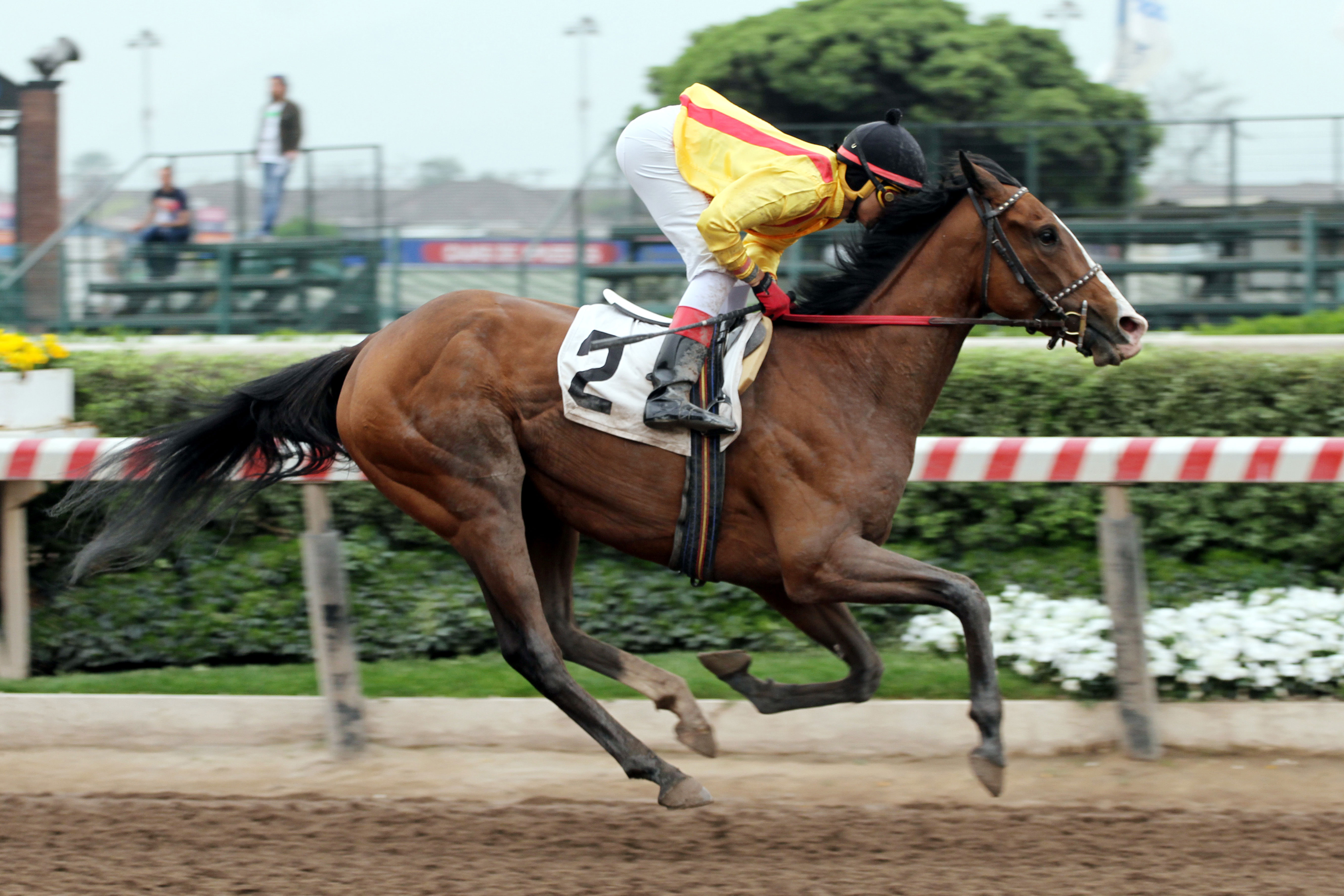 Amante Lady (Authorized) se lleva Condicional (1500m-Arena-HCH).