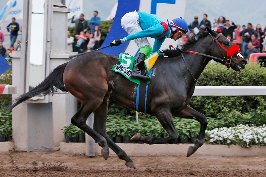 Wow Cat (Lookin At Lucky) se impuso en el Clásico Alberto Solari Magnasco (<b>G1</b>-2000m-Arena-HCH).