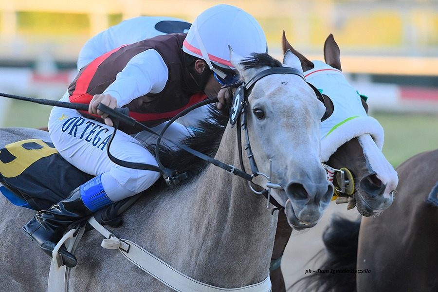 Know Now (Gold Gulch) se impuso en Condicional (1000m-Arena-PAL). - Staff ElTurf.com
