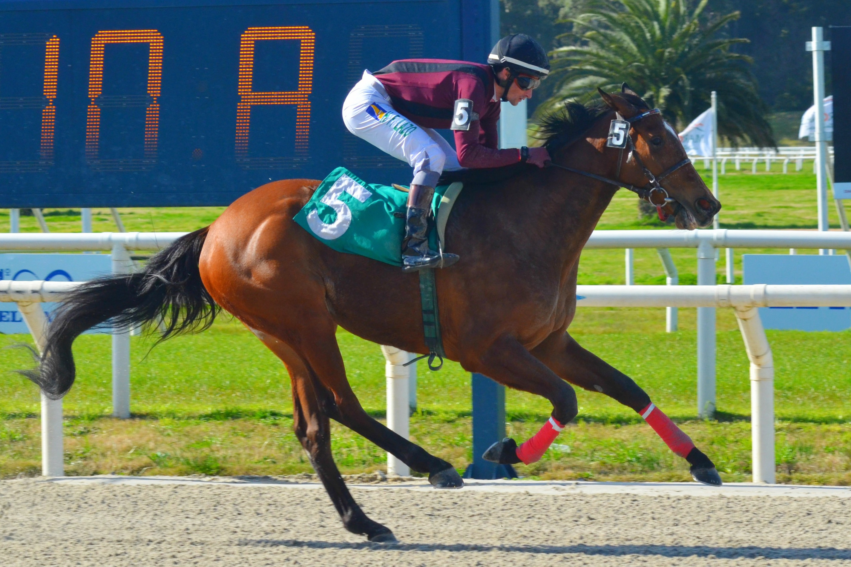 Lilly Spencer (Southern Lawyer) brilla en Condicional (1200m-Arena-MAR).