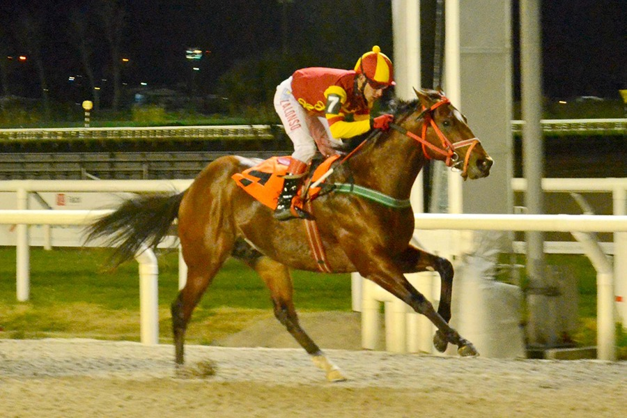 Magic Grass (Bluegrass Cat) se quedó con la victoria en Condicional (1100m-Arena-MAR). - Staff ElTurf.com