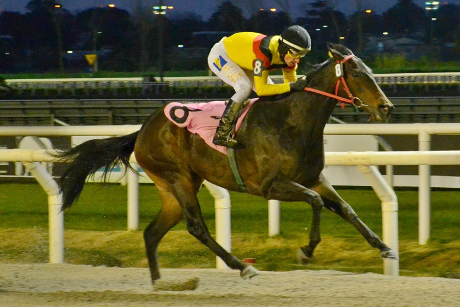 Honey Kiss (British Medium) brilla en Condicional (1100m-Arena-MAR). - Staff ElTurf.com
