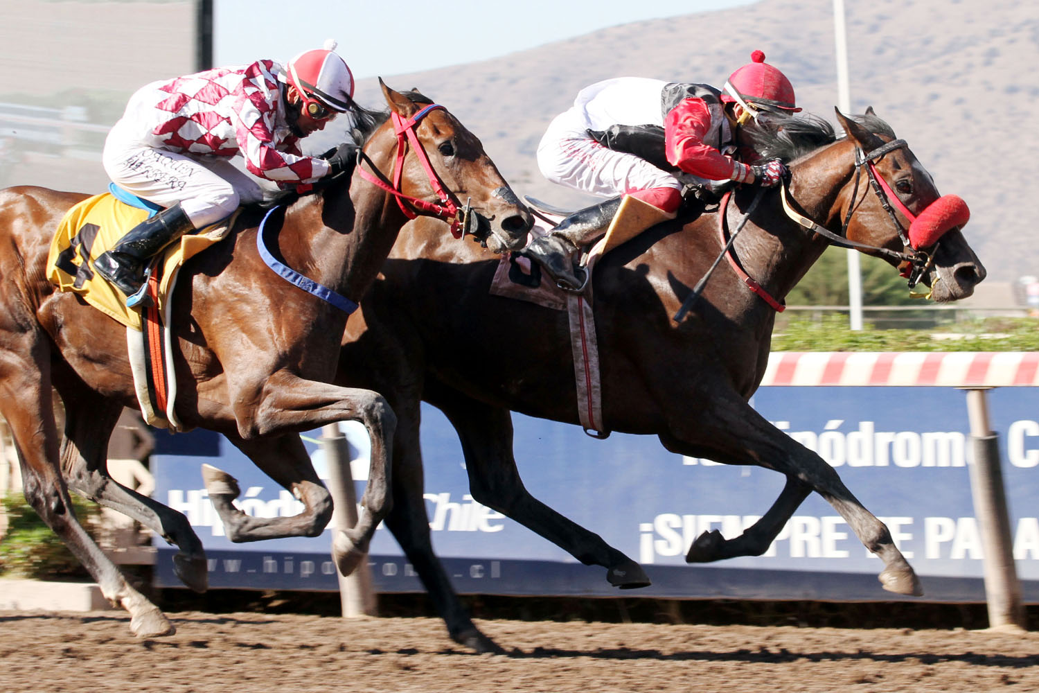 God Is My Guide (Morning Raider) gana Condicional (1200m-Arena-HCH).