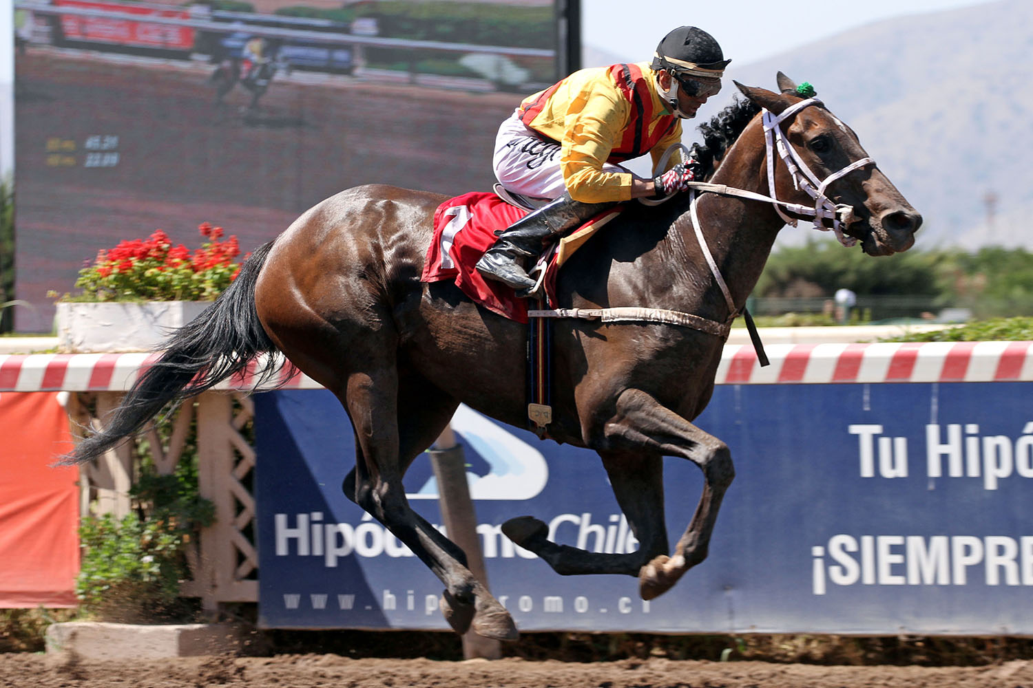 Remembranzas (Bad Daddy) se queda con Condicional (1200m-Arena-HCH).